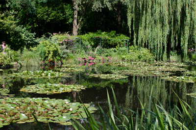 optim-lilly-pond-3